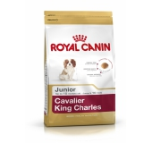 BHN CAVALIER KING CHARLES JUNIOR 1,5 kg